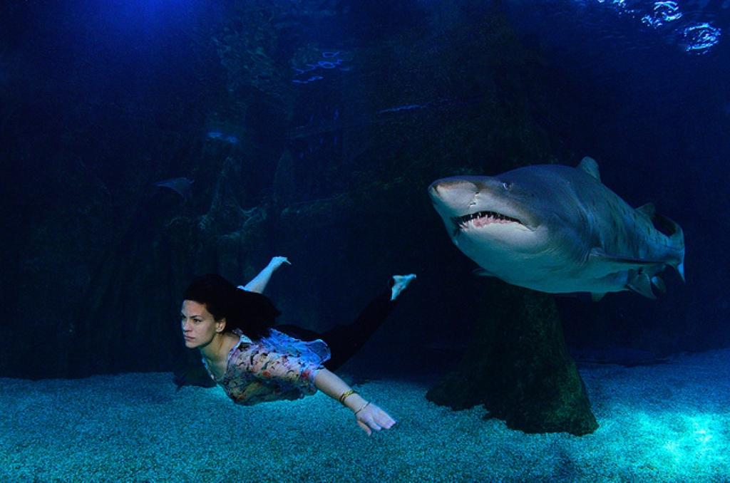 Aquarium Roquetas De Mar En Roquetas De Mar Oceanario En